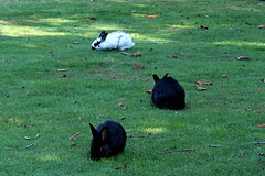A few of the Infamous UVic Bunnies