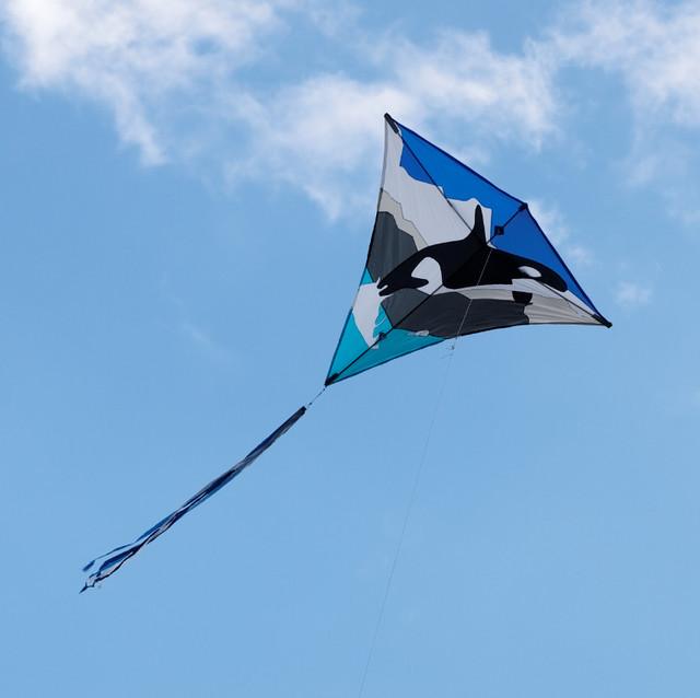 Eggerdon Hill Kite Festival 2010_14