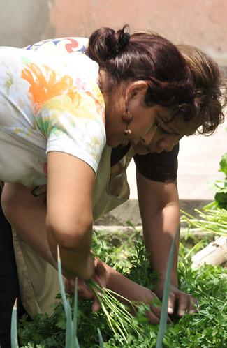 Minga Tarapacá Septiembre 2010