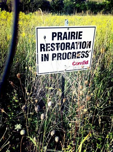 Prairie Restoration in Progress