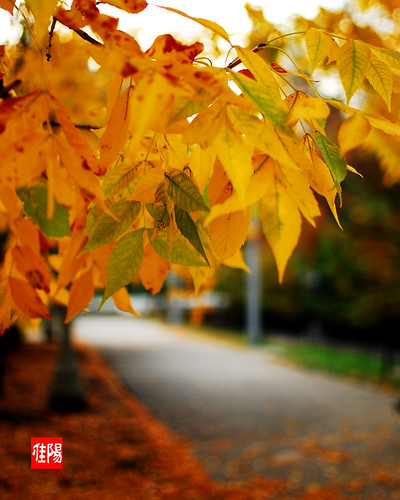 D80-CHI_AutumnLeaves02-2010_10-10B