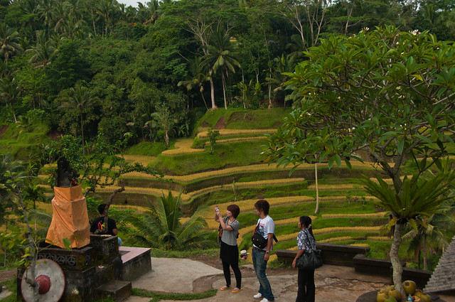 Picture postcard Bali - tourists, temple and rice terraces