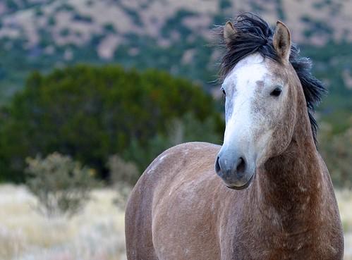 NM Wild Horses nwm (35)