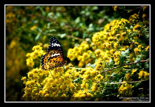 [Street] Farm at HuaningLu #3:  Butterfly in the field