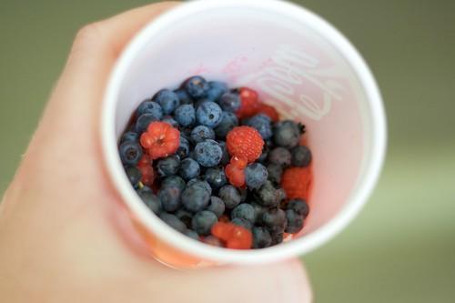 Wild Manitoba Berries