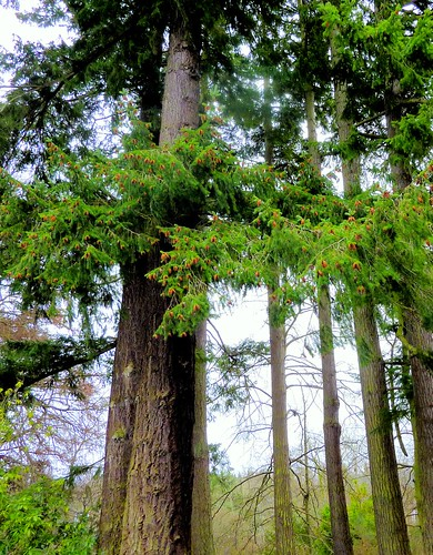 Ness Islands Trees