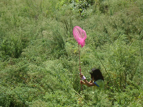Ruderalpflanzen, Sukkzession