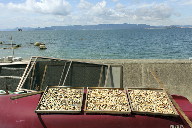 drying peanuts