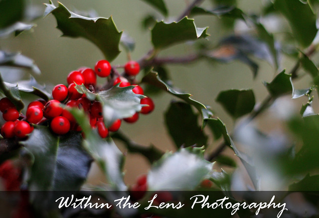 berries, plants, plant life, red, green, photography, within the lens