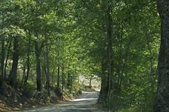 Bosco dei Monti Sibillini