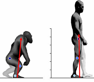 20070717_bipedalism
