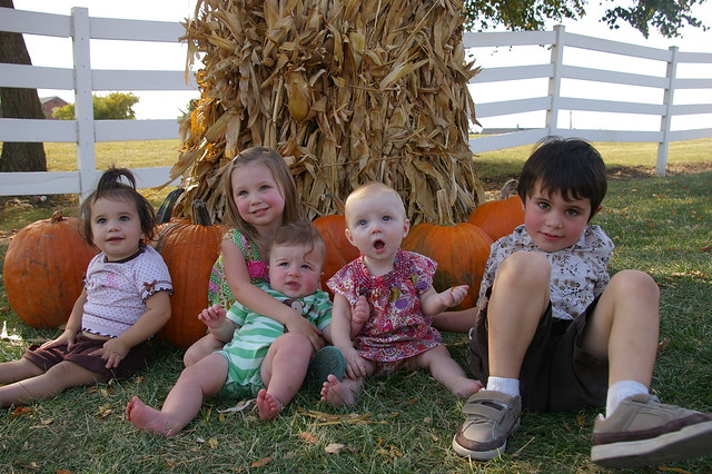 pumpkin patch 035