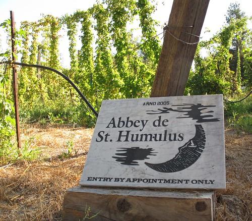 Hop harvest at the Abbey de St Humulus