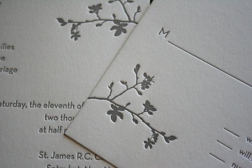 gray blossom