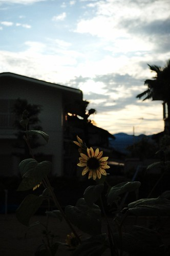 夏の終わりと夕焼け