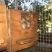 Juvenile squirrels in their nest box, Animal Advocates, Mary Cummins