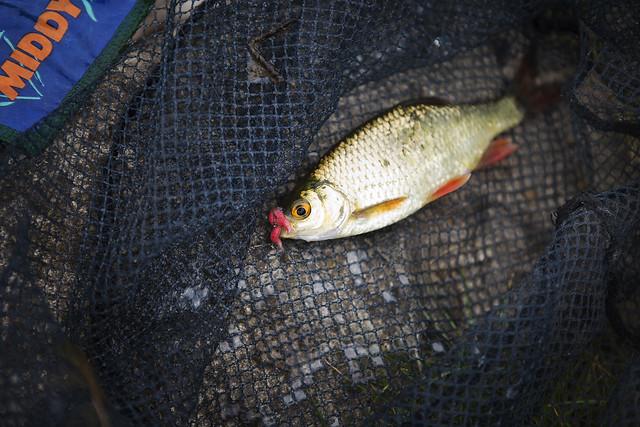 Fishing_69