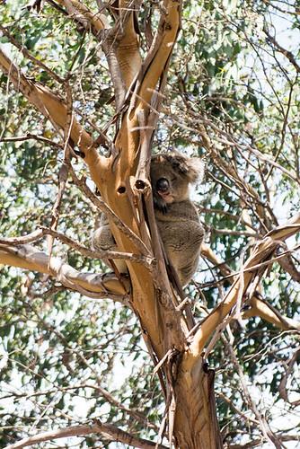 Kangoroo Island