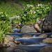 """DSC_4619_Stream with water lilies • <a style=""""font-size:0.8em;"""" href=""""http://www.flickr.com/photos/69519377@N04/34688085176/"""" target=""""_blank"""">View on Flickr</a>"""
