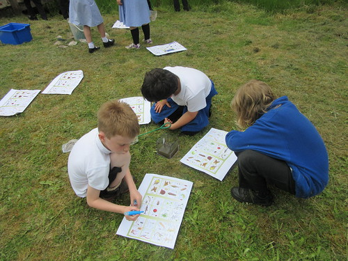 Pond dipping... trying to identify the creatures we found.