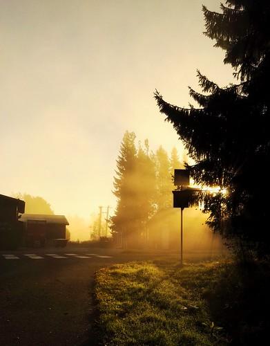 morning autumn fall sunlight light yellow daylight finland lapinlahti mobile huawei artistic beautiful