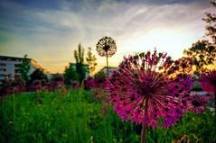 Blume im Südostpark / Citypark Karlsruhe