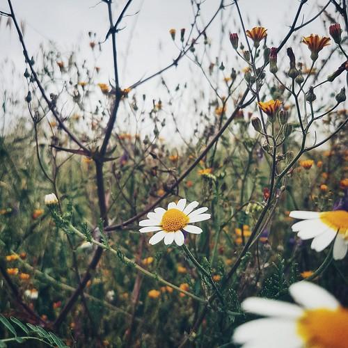 Eu vejo flores em você