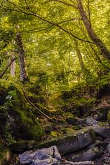 Bosque Asturiano.