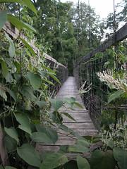 Triplett Creek suspension bridge