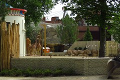 316 - 2017 06 10 - Giraffen wennen aan nieuw verblijf