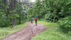 Ieșirea din pădure la Nifon