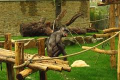 349 - 2017 07 01 - Chimpanseeverblijf
