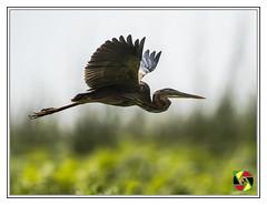 Flying above Mabamba Swamp