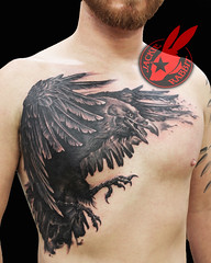 Realistic Raven Crow Chest Piece 3d Wings Black and Grey Tattoo by Jackie Rabbit
