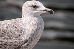 Wismar: Möwe im Alten Hafen - Seagull in the Old Harbour