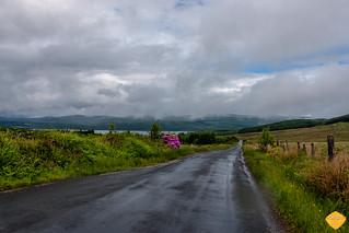 Scotland -16