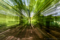 "zooming forest • <a style=""font-size:0.8em;"" href=""http://www.flickr.com/photos/73234388@N04/37348680142/"" target=""_blank"">View on Flickr</a>"