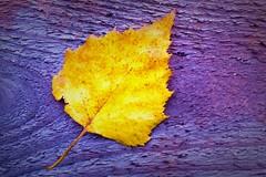 Autumn soon
