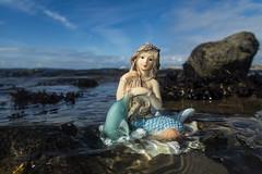 mermaid at baiter