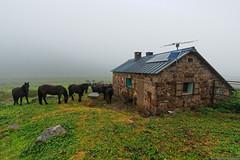 """Abords de la cabane de Quioulès • <a style=""""font-size:0.8em;"""" href=""""http://www.flickr.com/photos/30115700@N08/36758502841/"""" target=""""_blank"""">Voir sur Flickr</a>"""
