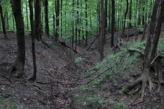Gertrude McPharlin Bauer Nature Sanctuary