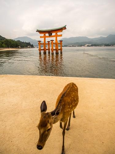 Miyajima - Japon