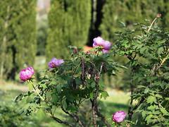 Centro Botanico Moutan_17P4081097__20K_EM5II_40150
