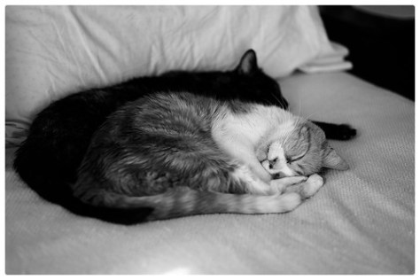 "Catnap • <a style=""font-size:0.8em;"" href=""http://www.flickr.com/photos/150185675@N05/35996312620/"" target=""_blank"">View on Flickr</a>"