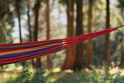 hammock outdoor forest