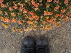 "TIlda8 • <a style=""font-size:0.8em;"" href=""http://www.flickr.com/photos/145215579@N04/37183808794/"" target=""_blank"">View on Flickr</a>"