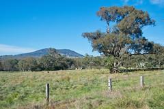 Mount Mckenzie