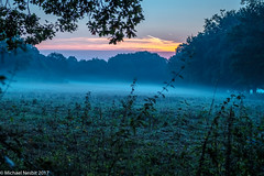 Cool Misty Morning-5993