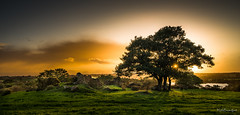 Bretagne-Iffendic-Sunset, Backlight and Trees