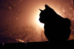 """Evening with cat • <a style=""""font-size:0.8em;"""" href=""""http://www.flickr.com/photos/134137971@N02/38395420882/"""" target=""""_blank"""">View on Flickr</a>"""